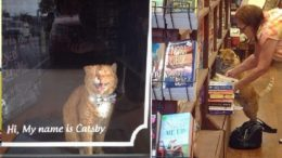 Shelter Cat Gets Second Chance And Spend His Golden Years In A Bookstore